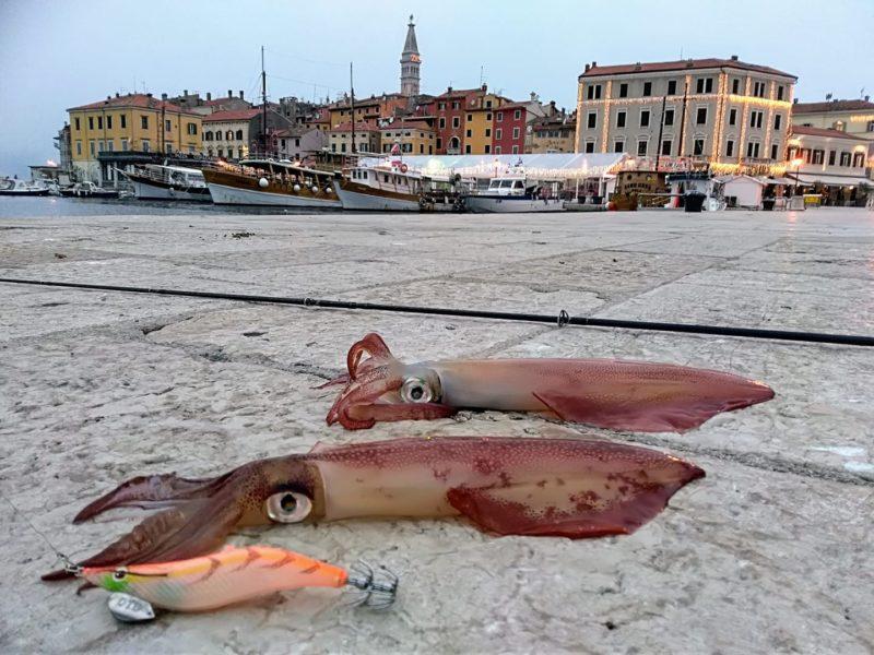 Toutes les astuces pour la Pêche du Calamar